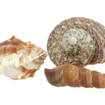 Shell mix for maritime decoration natural 400g