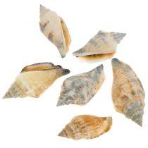 Shell mix natural 3cm - 5cm 200g