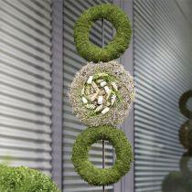 Floral foam wreath ring H3.5cm Ø25cm 6pcs