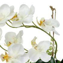 Orchid Phalaenopsis to hang H26cm cream