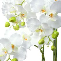 Orchid white with globe 110cm