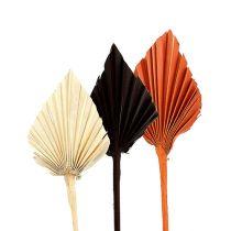 Palmspear mini assorted Marocco 30pcs
