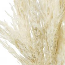 Pampas grass dried bleached dry decoration 65-75cm 6pcs in a bunch