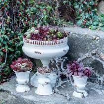 Planting cup antique cream Ø7.5cm H9cm 1p