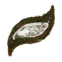 Plant wave vine, moss 45cm x 18cm H7cm
