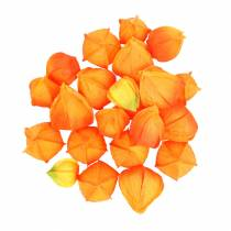 Physalis Orange Assorted 22pcs artificial calyxes