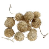 Sycamore fruits washed white 250g