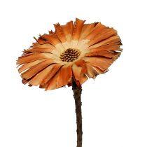 Repens rosette Super 10 - 12cm 250p