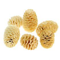 Sabulosum cones bleached 500g
