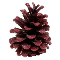 Black pine cones red frosted 5-7cm 1kg