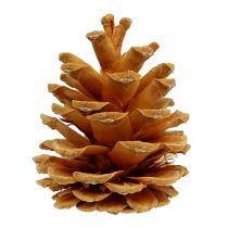 Black pine cream 5-8cm 1kg