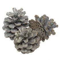 Black pine cones 5-9cm White washed 1kg