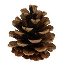 Black pine cones 5cm natural 5pcs