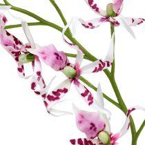 Spider orchids Brassia Pink-White 108cm 3pcs