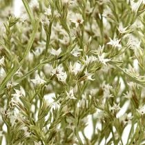 Sea lavender, Statice Tatarica, sea lavender, limonium, dried flowers 1 kg natural
