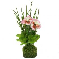 Pansies with moss balls pink 31cm