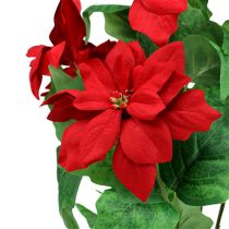Bouquet of poinsettia red L47cm