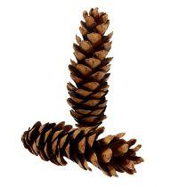 Strobus cones 20-25cm painted 50pcs