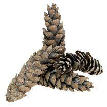 Strobus cones 15cm - 20cm white washed 50pcs