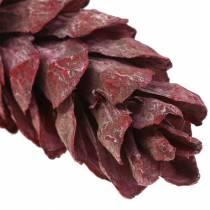 Strobus cones natural decoration red 15cm - 20cm 50pcs