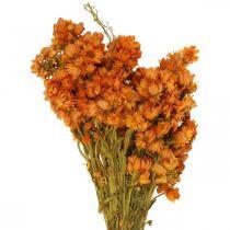 Everlasting Flowers Dried Flowers Orange Small 15g