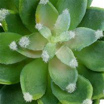 Succulent stone rose green Ø10cm H11cm 3pcs