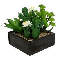 Succulents in a wooden box H14cm 1p