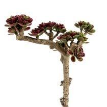Succulent L 20cm green-purple