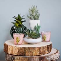 Succulent in pot 17cm green