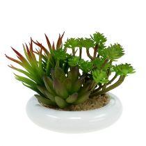 Succulents in a pot Ø12cm H11cm 1p