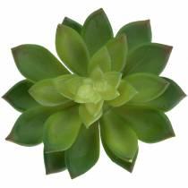 Succulent houseleek green 14cm