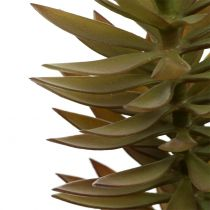 Succulent branch light brown green 48cm