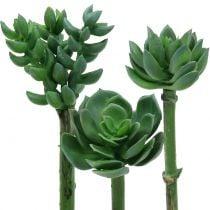Succulents assorted 11cm 3pcs