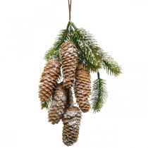 Fir green with cones, winter decoration, pine branch to hang, cone decoration, snow-covered L33cm