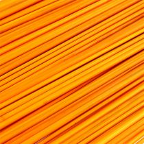 Tonkin golden yellow 70cm - 80cm 150p.