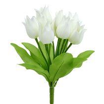 Tulip bush white 30cm