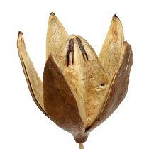 Wild lily on a stick natural colors Ø6.5cm L55cm 45pcs
