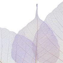 Willow leaves skeleton light purple 200p.