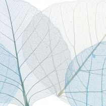 Willow leaves skeletonized blue, gray assorted 200pcs
