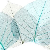 Willow leaves skeleton gray, turquoise 200p