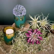 Succulent plant 15cm purple