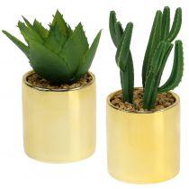 Cacti green in golden pot 12cm - 17cm 4pcs