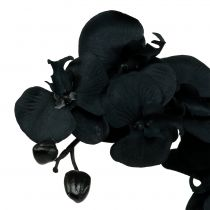Orchid to decorate black 54cm