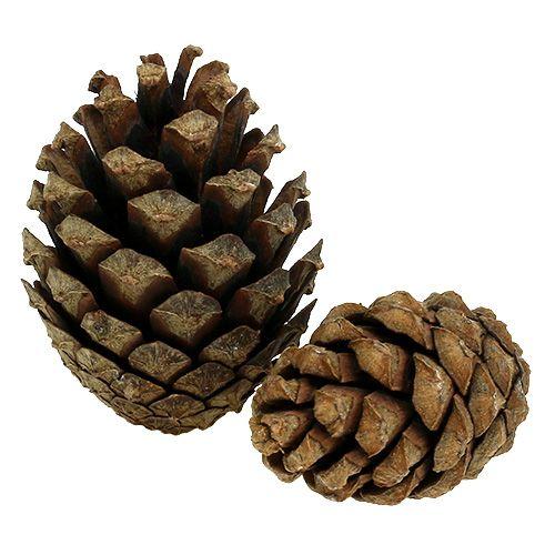 Mountain pine cones Pine cones 2kg