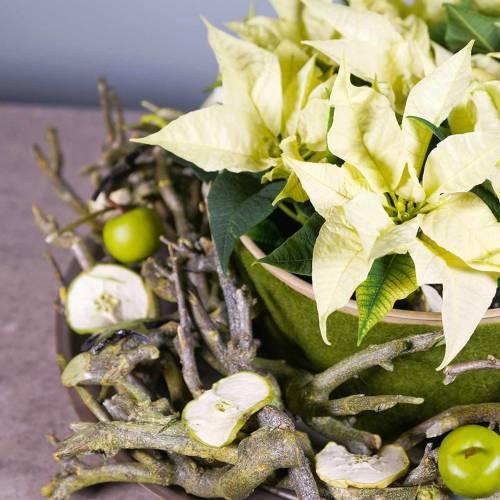 Dekoast curry bush green washed 500g