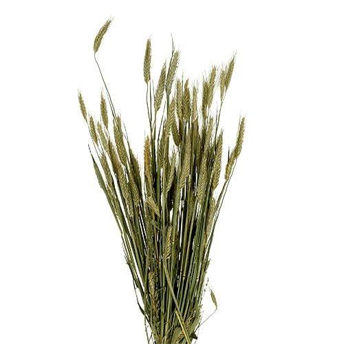 Grain decoration Triticale as a Bund Natur 1bund