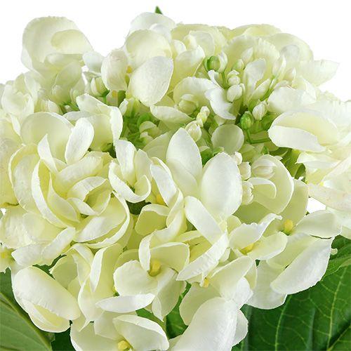 Hydrangea 60cm white