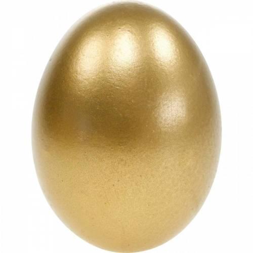 Chicken Eggs Blown Eggs Easter Decoration Different Colors 10pcs