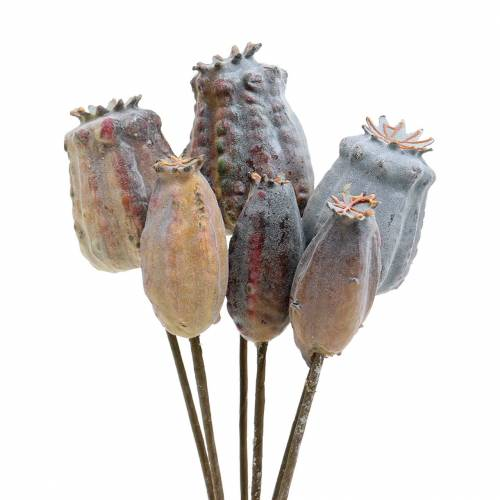 Artificial poppy seed capsules yellow, brown 6pcs