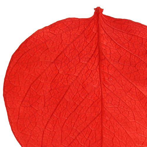 Moneta leaves red 50g